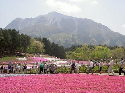 後ろの山は秩父市のシンボル「武甲山」