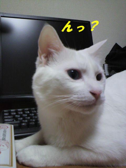 コロッケ4