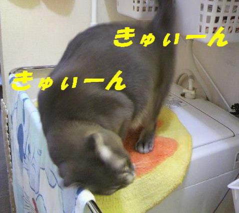 KY7.jpg