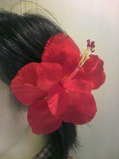 haibiscus