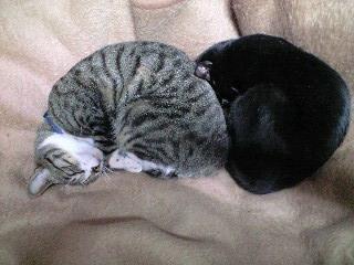 マルコと桜子
