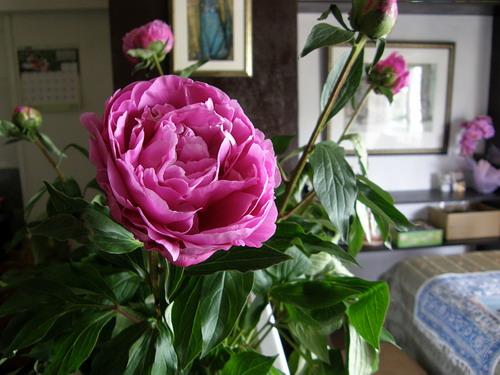 キッチンの石楠花