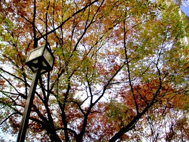 omosan_autumn0811.jpg