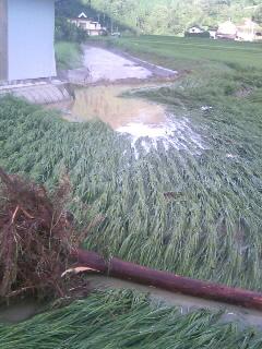 氾濫した川から流れ込んだ丸太