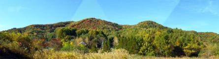 我が家周辺の紅葉