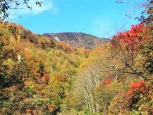 皇海山山頂方面の紅葉1