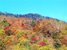 皇海山山頂方面の紅葉2