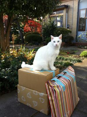 shiro on parcels