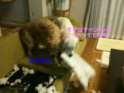 20110328_03.jpg