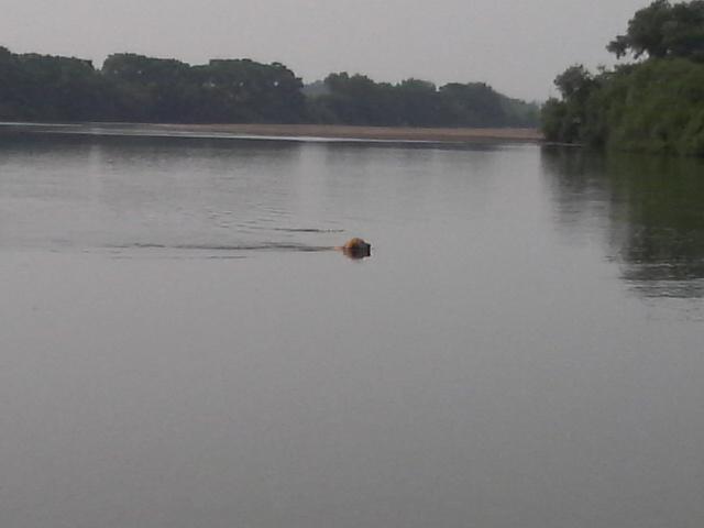 2009ラム初泳ぎ2