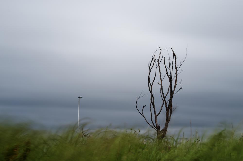 風の強い日