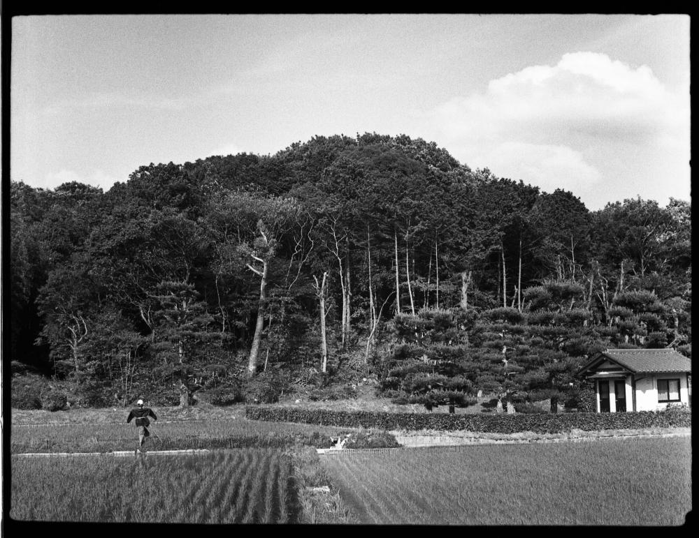 奈良の初夏