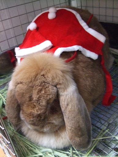 クリスマスb4