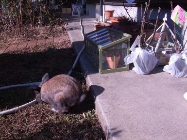 庭で放牧1