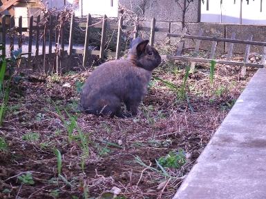 庭で放牧2