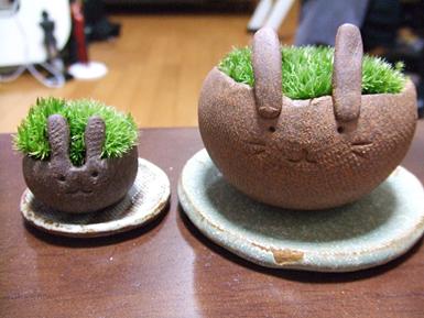 苔兎 正面