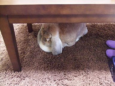 テーブルの下の米