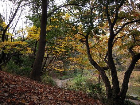 山(丘?)の上から。秋の公園は、色でいっぱいになりますね~。