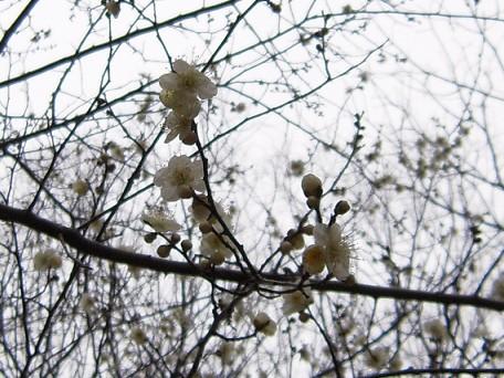 もうちょっとで春・・・・・♪♪♪