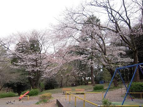 桜ももう終わり・・・。