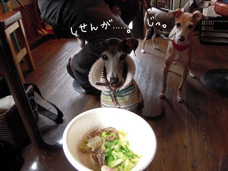 ねぇ。ナニ食べてるの?ソレナニ???おいしいの?おいしいの食べるの???