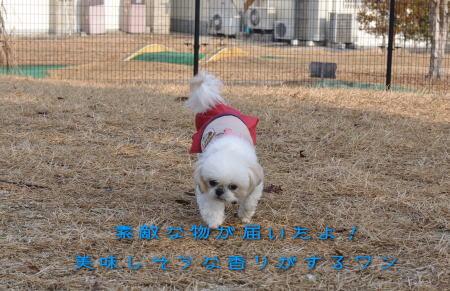 """クンクン""""( ̄*) (* ̄)""""クンクン"""