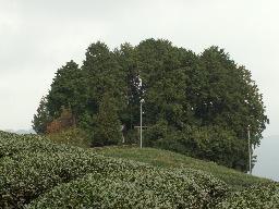 073-47.jpg