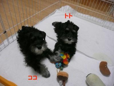 雅っ子ココとトト2月8日