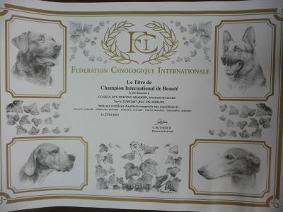 FCI登録証明書2月9日