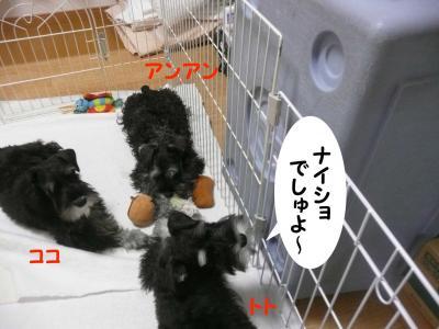 雅っ子2月21日1
