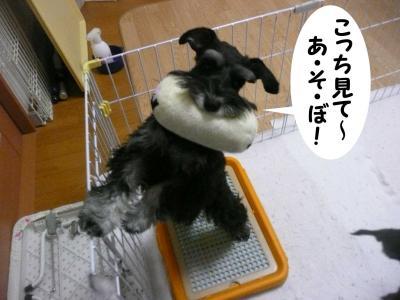 雅っ子トト2月23日