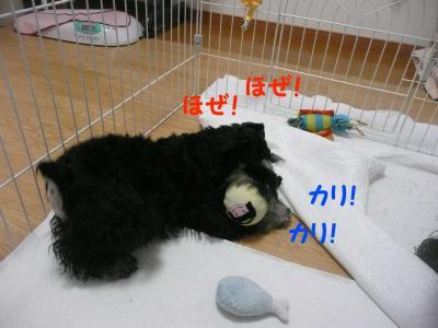 雅っ子トト2月25日3