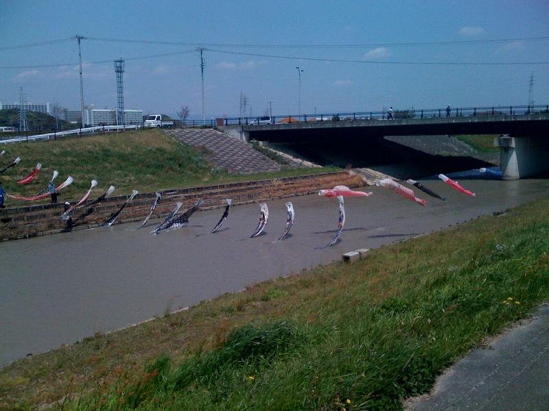 20110424 鯉のぼり5