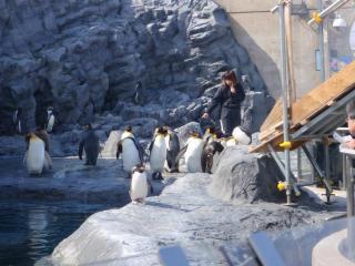 ペンギンも歓迎