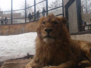 ライオンさん1