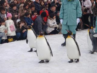 ペンギンさん1