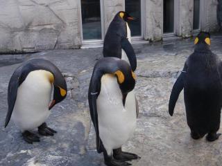 ペンギンさん2