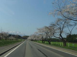 小岩井牧場への道