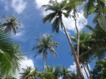 ココパームの青い空