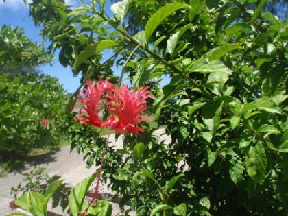 この花は何でしょう