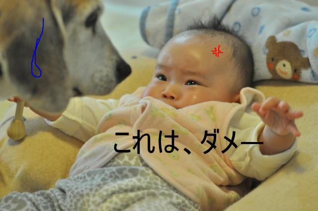 15_20120403121040.jpg