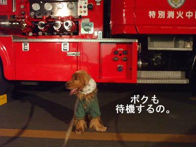 ボクは消防士になりたいの。