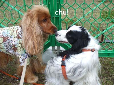 dogrun-festa2009-0016.jpg