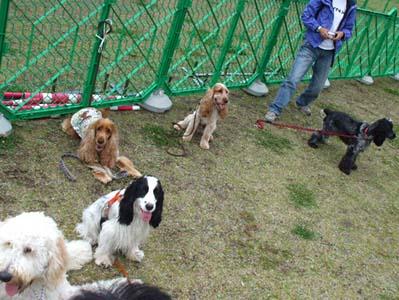 dogrun-festa2009-0019.jpg