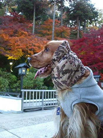 紅葉が見頃なの。