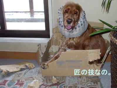 takumi2009-006.jpg