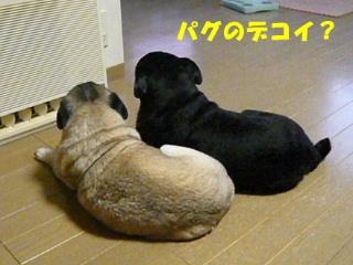 2008_1215wash0006b.jpg