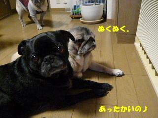 2008_1215wash0008b.jpg
