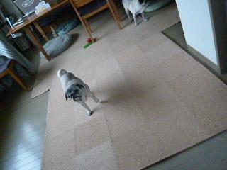 2009_0109yuka0004.jpg
