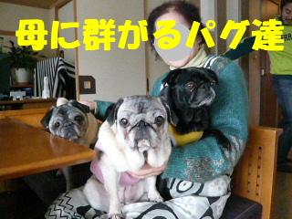 2009_0115mama0014b.jpg
